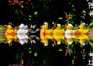 Rubber Ducks