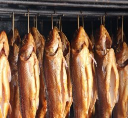 Hanging fish in smokehouse