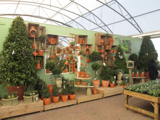 Terracotta Pot Display Notts