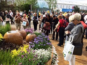 Crane Garden Buildings Planting Scheme � RHS Chelsea 2014