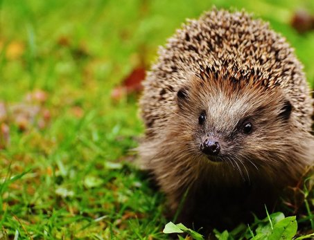 You Can Welcome All Sorts Of Wildlife Into Your Garden This Summer, Including a Hedgehog