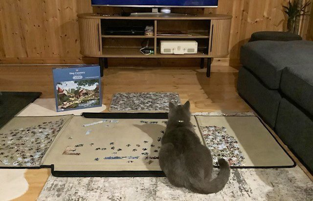 A Cat with a Jigsaw Puzzle inside one of our Garden Buildings