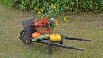 Harvest Wheelbarrow