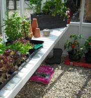 Garden Shed Planting