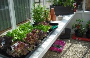An interior shot of a greenhouse showing slatted workbenches and potting plants alongside terracotta bots and wellies.